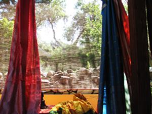 Saris-Trees-sm